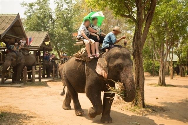 大象是被训练来承受你的重量